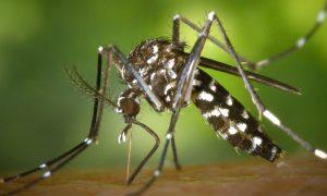Quais são as principais doenças transmitidas por mosquitos no Brasil?
