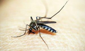 Repelentes para mosquitos: Você sabia que não são todos iguais?