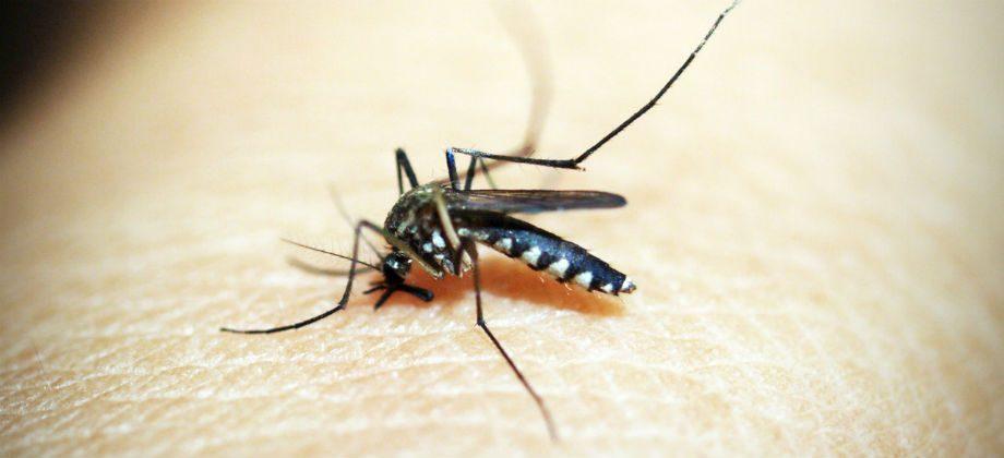 Imagem do post Repelentes para mosquitos: Você sabia que não são todos iguais?