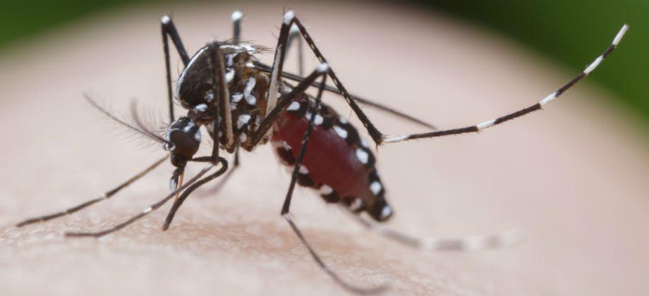 Imagem do post Toda picada do mosquito Aedes aegypti transmite a dengue? Saiba mais!