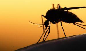 Por que os mosquitos se multiplicam no verão?