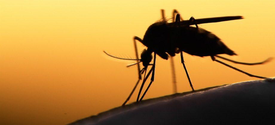 Imagem do post Por que os mosquitos se multiplicam no verão?
