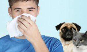 Pessoas com rinite alérgica podem ter gatos ou cachorros em casa?