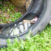 Dengue: os principais criadouros de mosquitos que podemos encontrar em casa