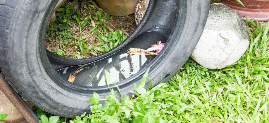 Imagem do post Dengue: os principais criadouros de mosquitos que podemos encontrar em casa