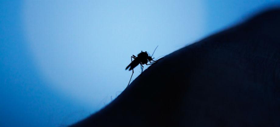 Qual é a melhor maneira de se proteger dos mosquitos durante a noite?