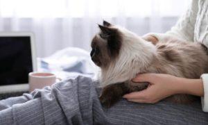 Pessoas com asma podem ter gatos em casa?