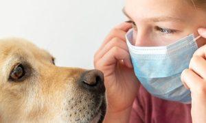 O convívio com pets influencia a imunidade das crianças?