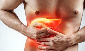 Como a silimarina age na redução da gordura no fígado?